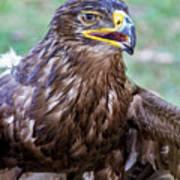 Birds Of Prey Series 3 Poster