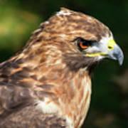 Birds Of Prey Series 5 Poster
