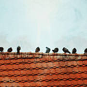 Birds On A Rooftop Poster