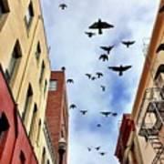 Birds Overhead Poster