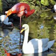 Birds Together Poster