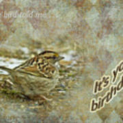 Birthday Greeting Card - White-throated Sparrow Songbird Poster