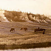 Bison Firehole River Yellowstone Poster