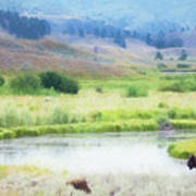 Bison In The Meadow Poster