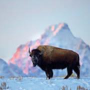 Bison Mountain Sunset Poster