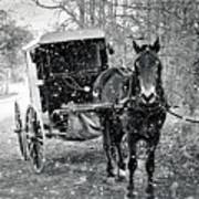 Black And White Amish Buggy Poster