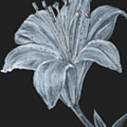 Black And White Asiatic Lily Poster