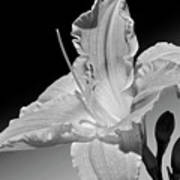 Black And White Daylily Poster