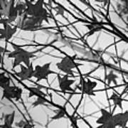Black And White Leaves Poster