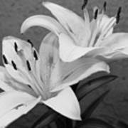 Black And White Lilies 1 Poster