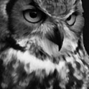 Black And White Owl Painting Poster