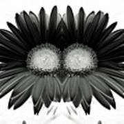 Black And White Petals Poster