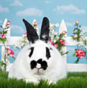 Black And White Spring Bunny Poster