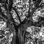Black And White Tree 4 Poster
