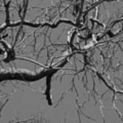 Black And White Tree Branch Poster