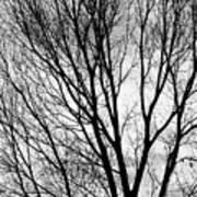 Black And White Tree Branches Silhouette Poster