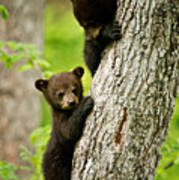 Black Bear Pictures 84 Poster