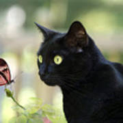 Black Cat And Butterfly Poster