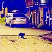 Black Cat Crosses Path Poster