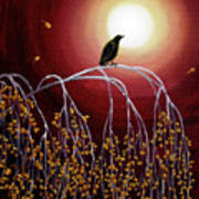 Black Crow On White Birch Branches Poster