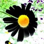Black Daisy Poster