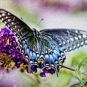 Black Eastern Swallowtail Poster