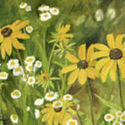 Black-eyed Susans In A Field Poster