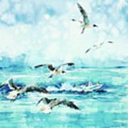 Black-headed Seagulls At Seven Seas Beach  Poster