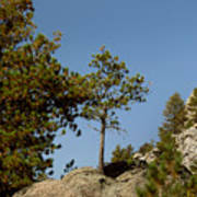 Black Hills Lone Tree Poster