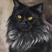 Black Maine Coon Poster