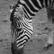 Black N White Stripes Poster