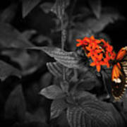 Black-orange Butterfly Poster