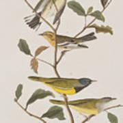 Black Throated Green Warbler Blackburnian Mourning Warbler Poster