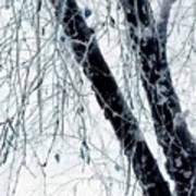 Black Tree White Night Poster