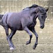 Blackhorse Poetry Poster