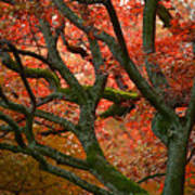 Blood Red Autumn Tree Poster