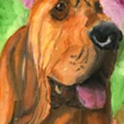 Bloodhound Dog Art Poster