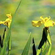 Blooming At Green Lake Poster