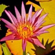 Blooming Lotus Flower Poster