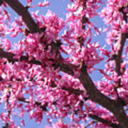 Blooming Red Buds Poster
