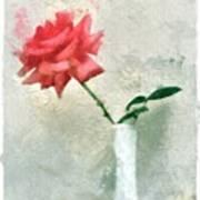 Blooming Rose Poster