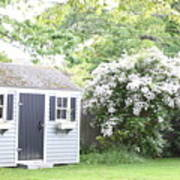 Blooming Tree Next To Shed Poster