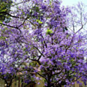 Blooming Tree With Purple Flowers Poster