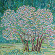 Bloomy Trees Poster