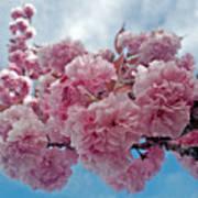 Blossom Bliss Poster