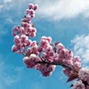 Blossom Impressions Poster