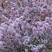Blossom Tree Poster