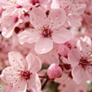Blossoms Art Prints 63 Pink Blossoms Spring Tree Blossoms Poster