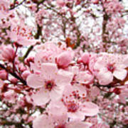 Blossoms Art Spring Pink Tree Blossom Floral Baslee Troutman Poster