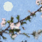 Blossoms In Moonlight Poster